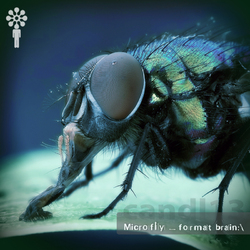 [candl13] Microfly - Format Brain:\